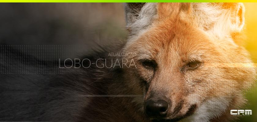 Atualização Lobo-Guará